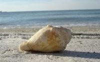 Ракушка на пляже