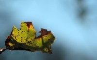Рваный лист