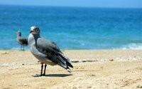 Чайка на пляже