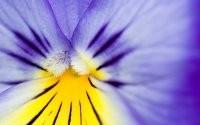 Фрагмент цветка
