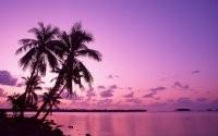 Пальмы на закате