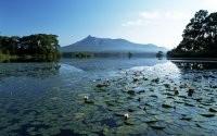 Озеро кувшинок