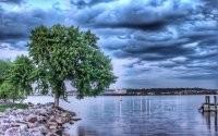 Дерево у воды