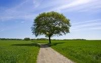 Дерево вдоль дороги