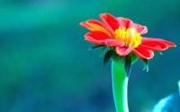 Великолепный цветок