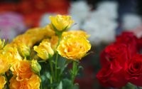 Желтое и красное