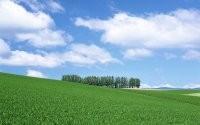 Травка на поле