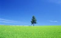 Дерево на лугу