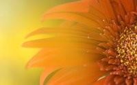 Лепестки цветочка