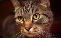 Мордашка кота