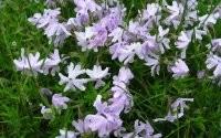 Мокрые цветы