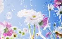 Мыльные пузыри и цветы