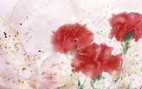 Три красных цветка