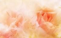 Фрагменты розы
