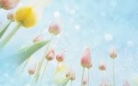 Тюльпаны и небо