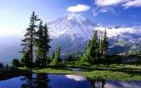 Белая гора и  деревья