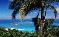 Острова и пальма
