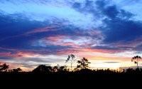 Закат за деревьями
