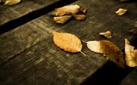 Листья на доске
