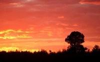 Закат солнца за деревьями