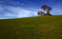 Деревья на бескрайних лугах