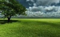 Зеленое дерево на лужайке