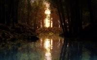 Водоем в лесу