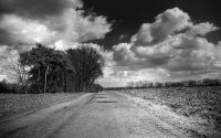 Дорога вдоль деревьев