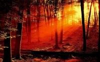 Солнечные лучи в лесу