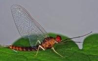 Макросъемка стрекозы