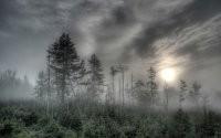 Засохшие деревья