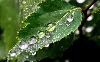 Капли дождя на листке