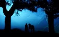 Ночной путник