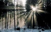 Лучи солнца в зимнем лесу