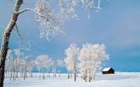 Деревья в инеи зимой