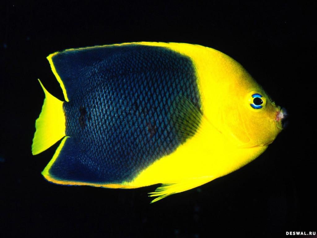 Фото 12. Нажмите на картинку с обоями подводного мира, чтобы просмотреть ее в реальном размере