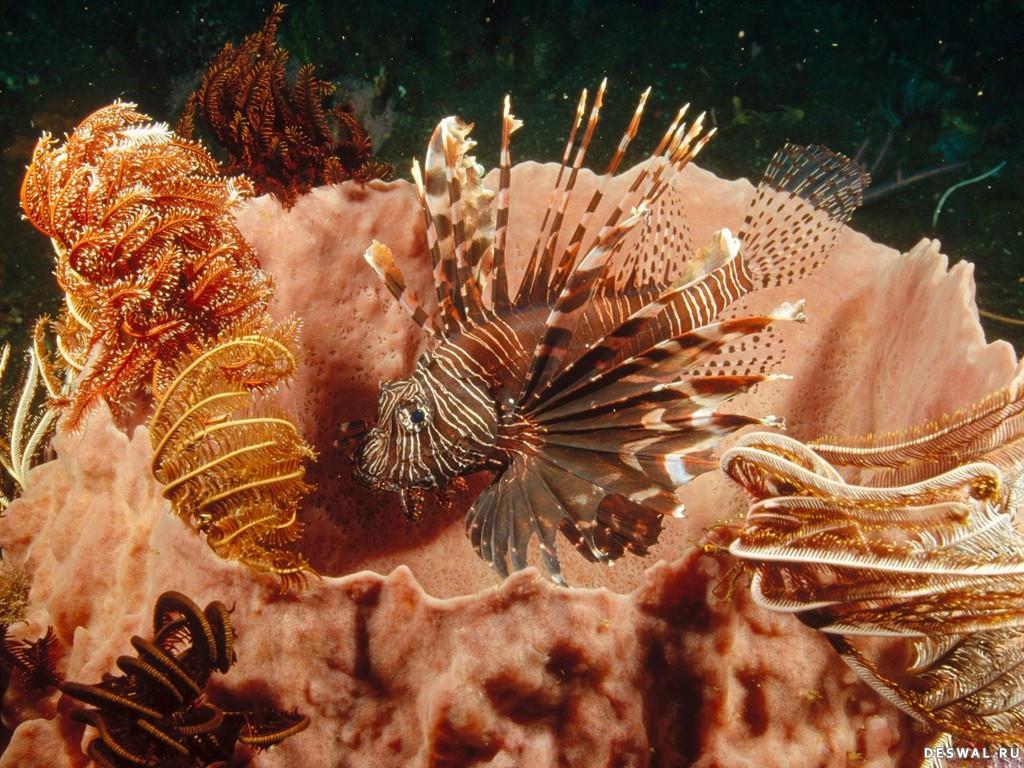Фото 13. Нажмите на картинку с обоями подводного мира, чтобы просмотреть ее в реальном размере
