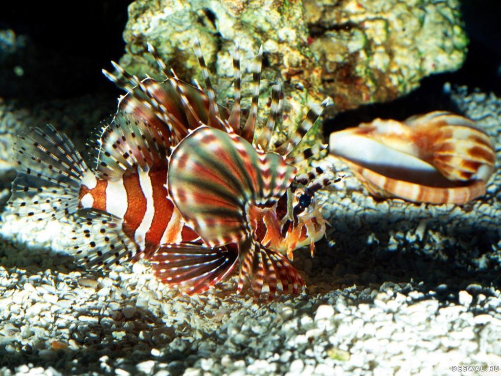 Фото 14. Нажмите на картинку с обоями подводного мира, чтобы просмотреть ее в реальном размере