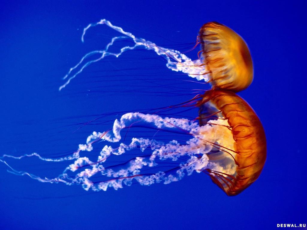 Фото 21. Нажмите на картинку с обоями подводного мира, чтобы просмотреть ее в реальном размере