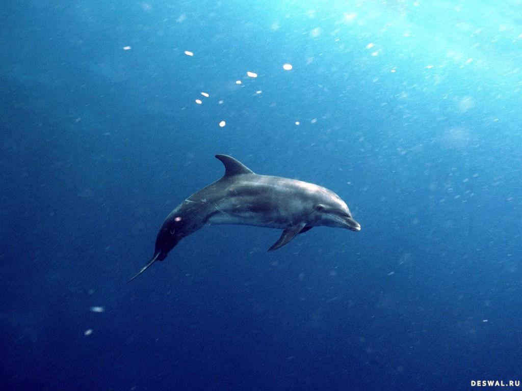 Фото 30. Нажмите на картинку с обоями подводного мира, чтобы просмотреть ее в реальном размере