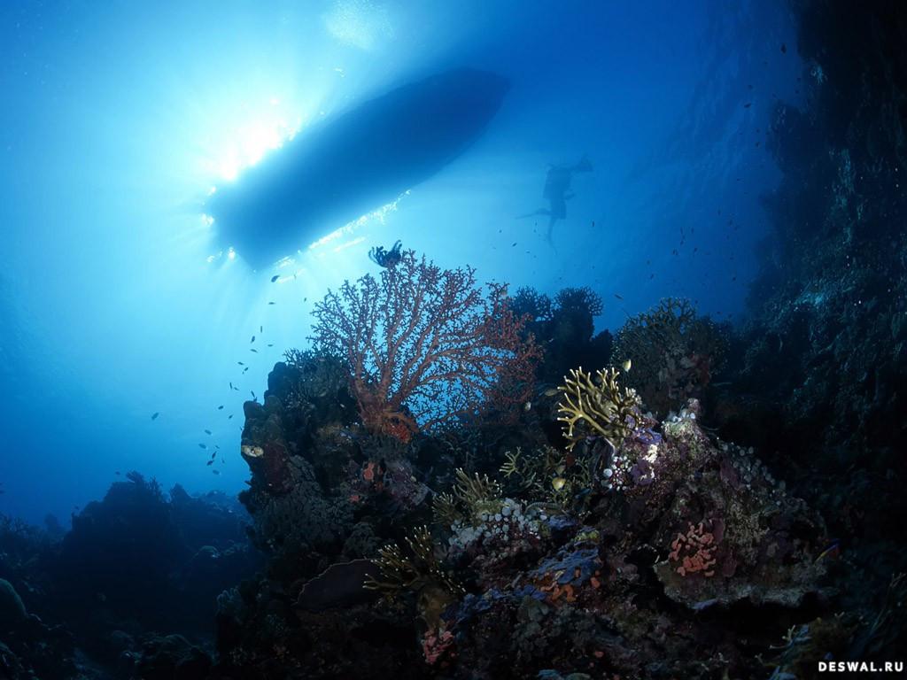 Фото 69. Нажмите на картинку с обоями подводного мира, чтобы просмотреть ее в реальном размере