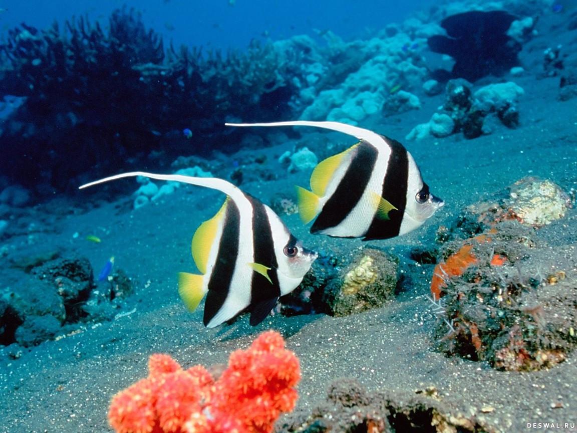 Нажмите на картинку с обоями подводного мира, чтобы просмотреть ее в реальном размере