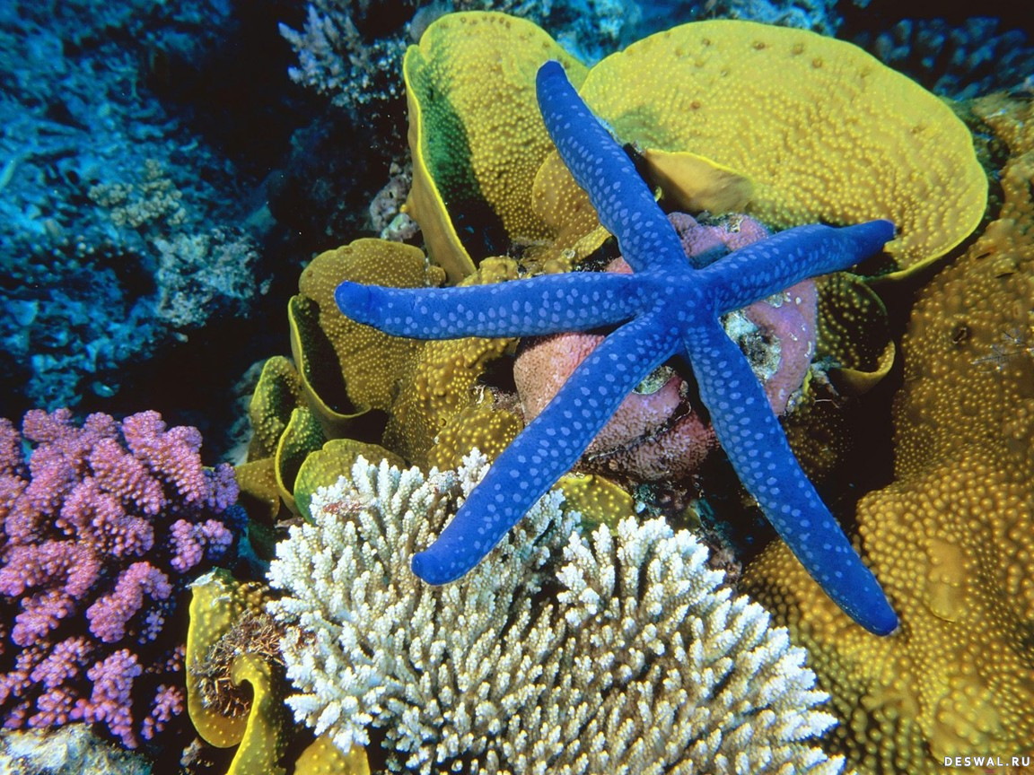 Фото 27. Нажмите на картинку с обоями подводного мира, чтобы просмотреть ее в реальном размере