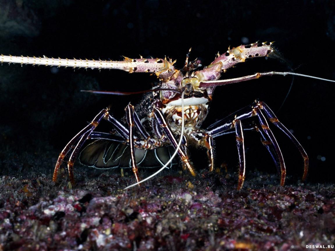 Фото 65. Нажмите на картинку с обоями подводного мира, чтобы просмотреть ее в реальном размере