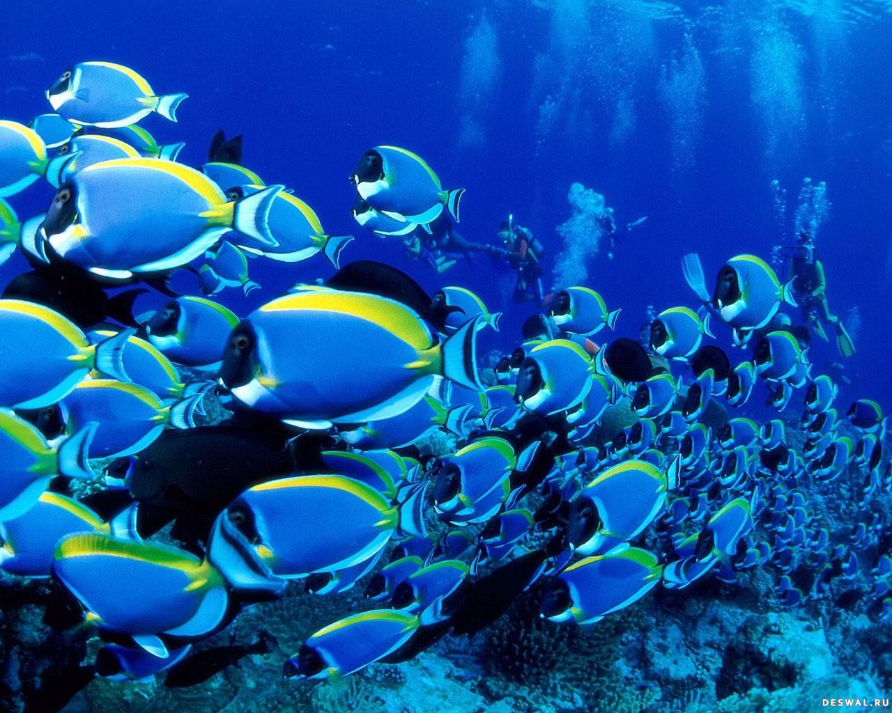 Фото 1. Нажмите на картинку с обоями подводного мира, чтобы просмотреть ее в реальном размере