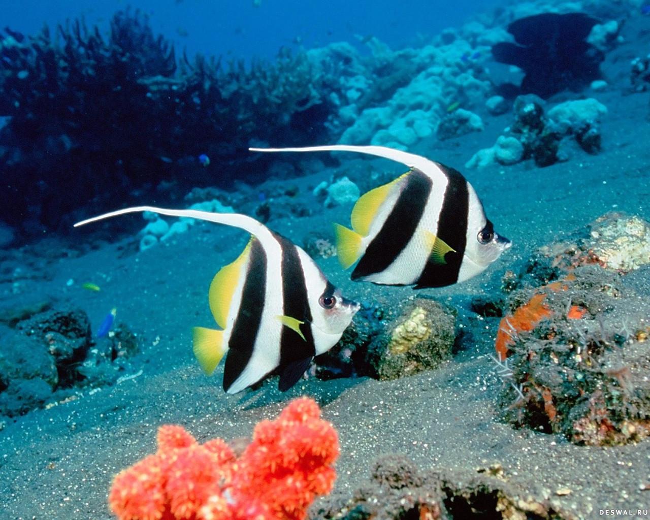 Фото 2. Нажмите на картинку с обоями подводного мира, чтобы просмотреть ее в реальном размере