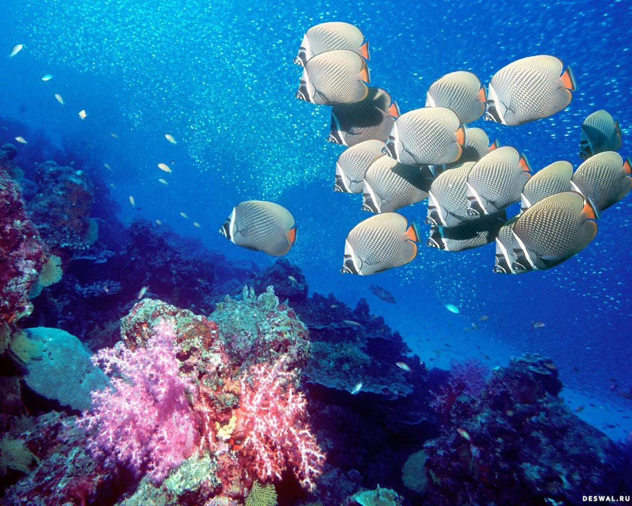 Фото 10. Нажмите на картинку с обоями подводного мира, чтобы просмотреть ее в реальном размере