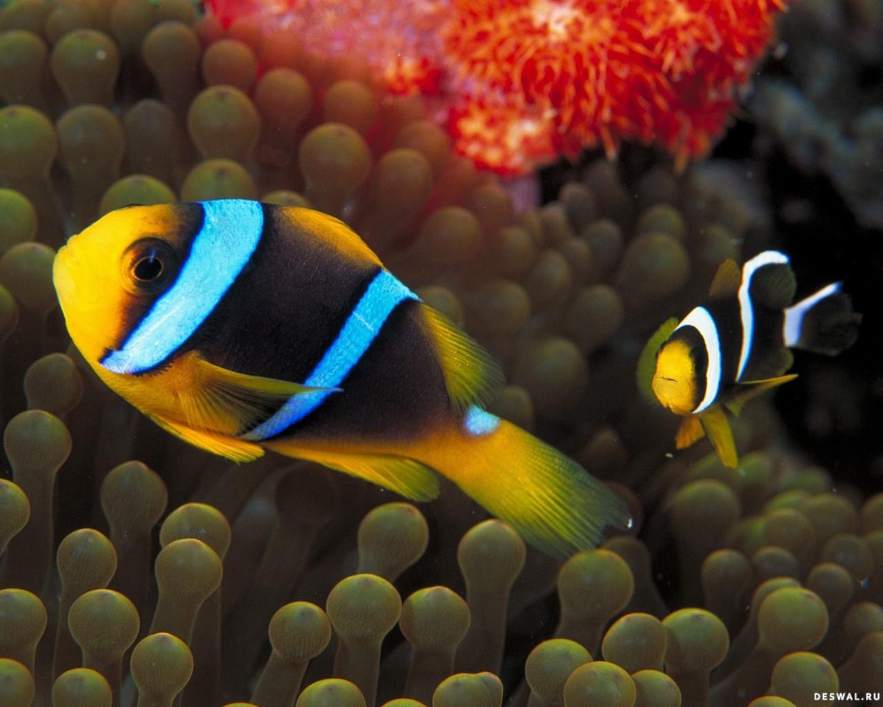 Фото 15. Нажмите на картинку с обоями подводного мира, чтобы просмотреть ее в реальном размере