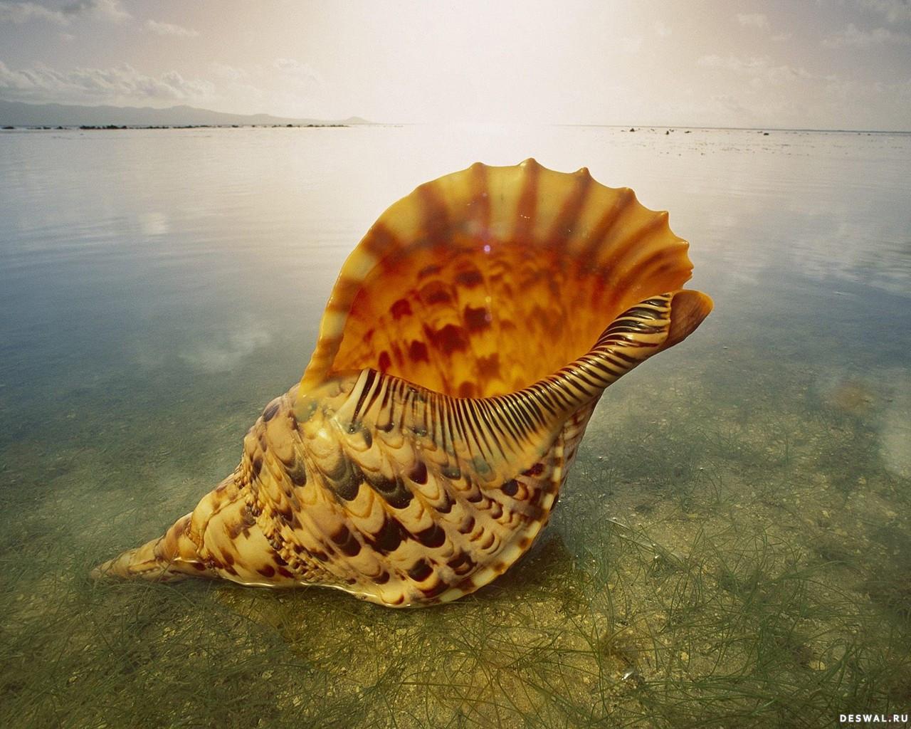 Фото 24. Нажмите на картинку с обоями подводного мира, чтобы просмотреть ее в реальном размере