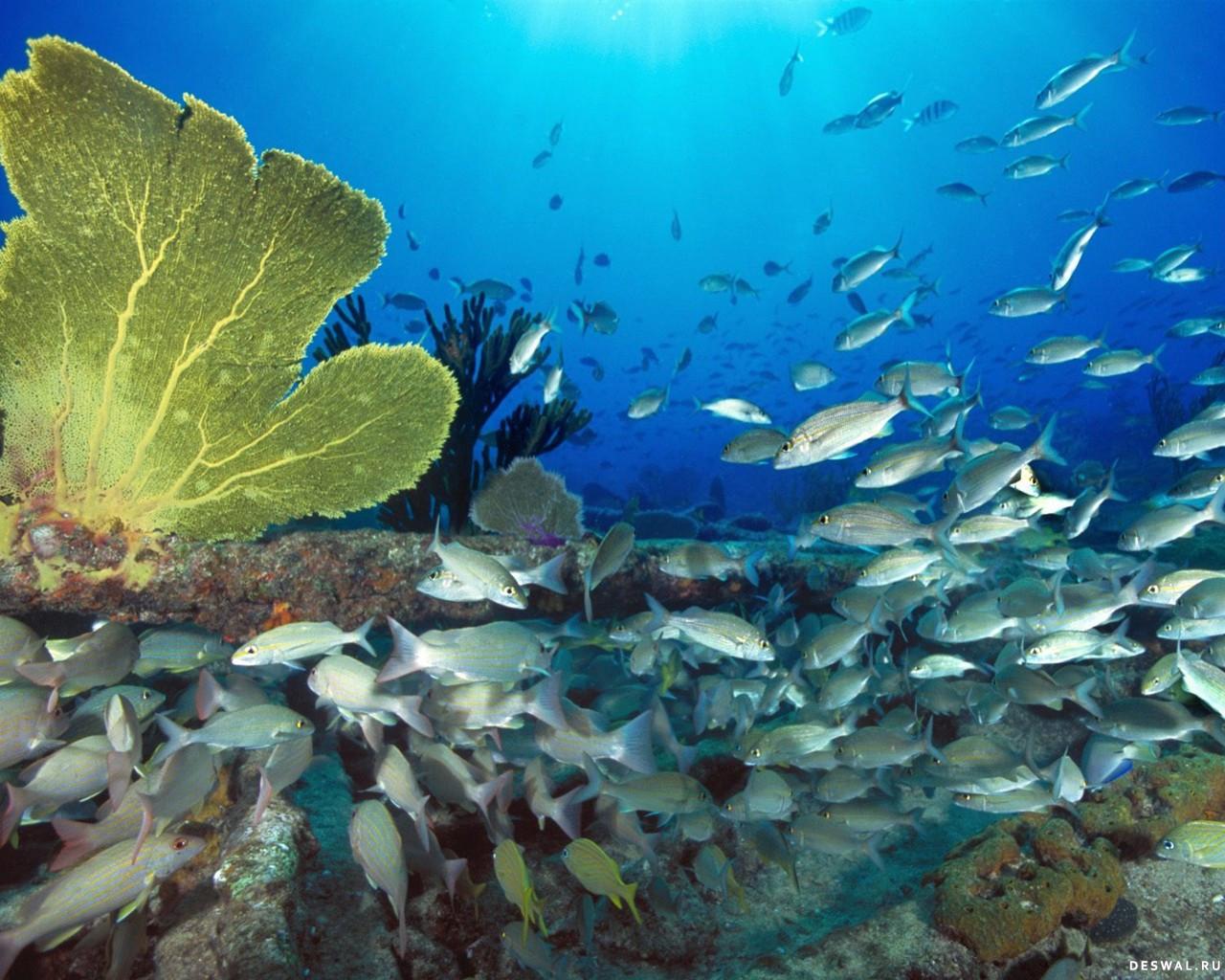 Фото 29. Нажмите на картинку с обоями подводного мира, чтобы просмотреть ее в реальном размере